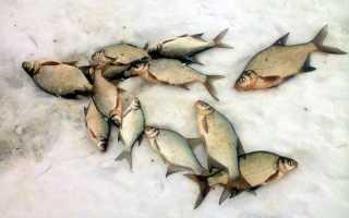 Ловля леща зимой на течении: снасти и оснастка для рыбалки на реке и со льда, видео