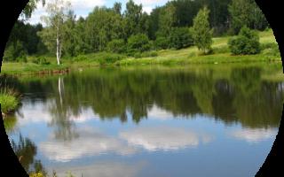 Платные пруды в Тульской области – их рейтинг, стоимость и улов