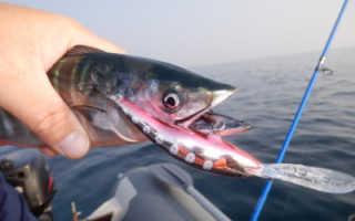 Рыбалка на черном море: как ловить, какая рыба водится, рыбалка с берега, видео