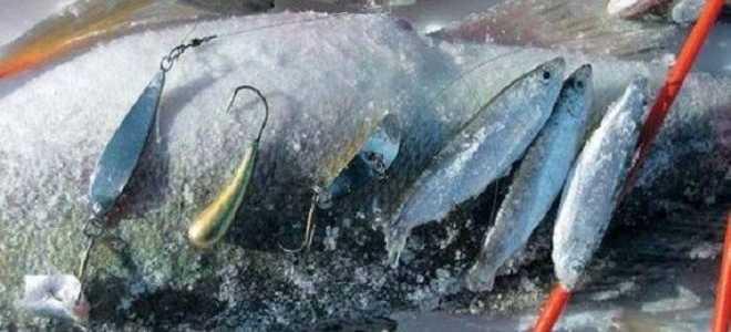 Зимние снасти на судака: удочка для ловли зимой и ее изготовление своими руками, рыбалка на тюльку
