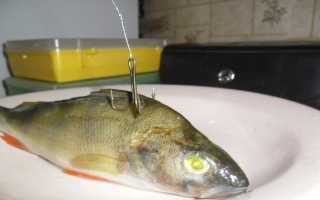Как насаживать живца на жерлицу разными способами: инструкция, отзывы рыбаков