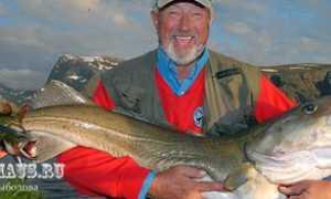 Ловля трески на Белом море: снасти для рыбалки, блесны, приманки для лова, где и как ловить?