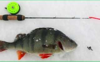 Безнасадка на окуня: зимняя рыбалка по первому льду, видео, снасти, ловля, как сделать своими руками?