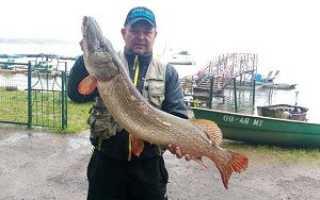 Платная рыбалка на озере Сенеже в Подмосковье: отчеты, отзывы о рыбалке на рыбхозе
