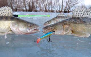 Балансиры на судака зимой: ловля, какие самые лучшие и уловистые – рейтинг