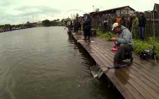 КРХ Савельево – рыбалка, официальный сайт и график работы клуба