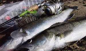 Отводной поводок на судака: ловля на течении, способы монтажа оснастки для спиннинга и видео
