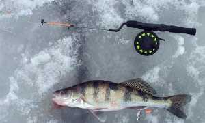 Лучшие мормышки на судака: ловля зимой, зимняя рыбалка, видео, как играть при ловле мормышкой?