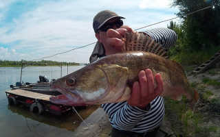 Ловля, клев рыбы в Воронежской области: базы отдыха, турбазы, какая рыба водится?