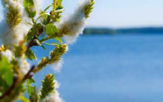 Платная рыбалка на Озернинском водохранилище: отчеты, стоимость, отзывы, видео, сколько стоит путевка в Хуторке?