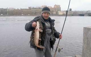 Рыбалка на Неве: лучшие места ловли за городом и в черте, Кировске, рыбалка на удочку, спиннинг, фидер