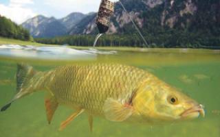 Ловля на донку с кормушкой – техника ловли и условия для успешной ловли