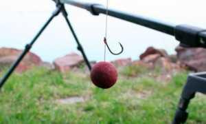 Как ловить на бойлы – принцип действия и все об оснастке