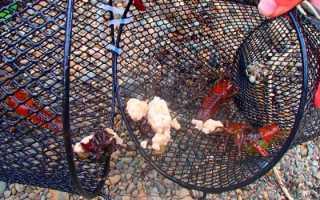 На что ловить раков в раколовке – особенности приманок и на какую ловить