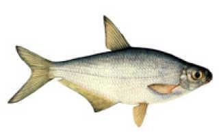 Ловля, клев рыбы в Пермском крае: Беризники, прогноз, где клюет, где ловят?