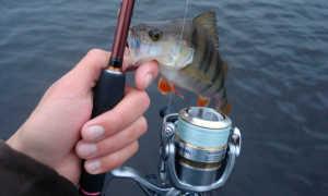 Рыболовные места Нижегородской области – как доехать, кого можно поймать