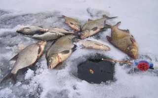 Снасть на леща зимой: удочки для рыбалки, зимняя оснастка для ловли и на что ловить?