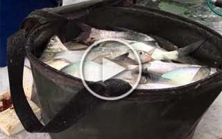 Рыбалка на зимний фидер со льда: оснастка, монтаж своими руками, видео, ловля