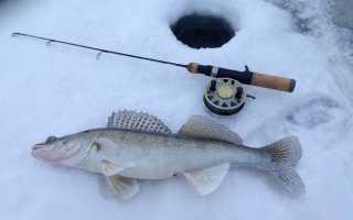 Ловля судака зимой на ратлин: зимняя рыбалка со льда, видео и топ лучших раттлин