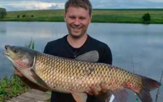 Белгородская область и Старый Оскол: рыбалка, платные и бесплатные пруды, водохранилище, водоемы