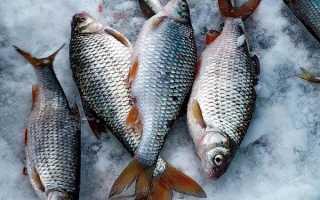 Зимняя оснастка на плотву: снасть поплавочная удочка для ловли, видео, оснастка на течении