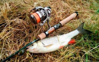 Спиннинги Major Craft Dodger: комплектация, обзор моделей, цена, отзывы рыбаков